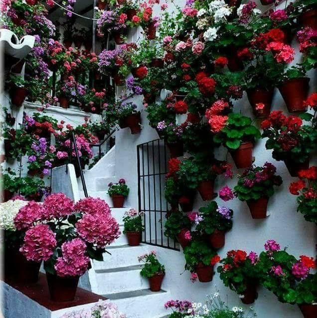 Un patio de vecinos
