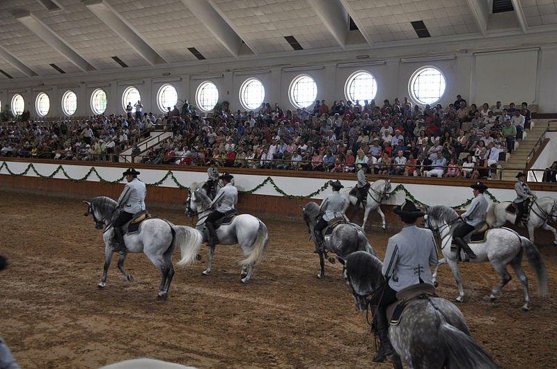 Caballos andaluces en la Real Escuela Ecuestre